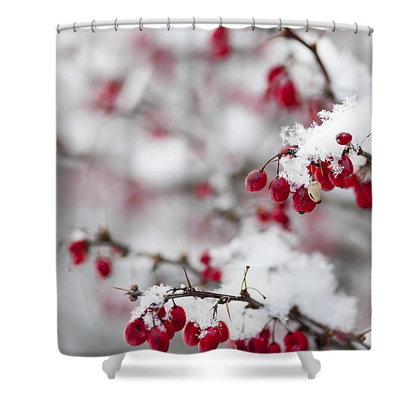 Red Winter Berries Under Snow Shower Curtain
