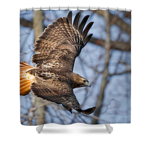 Redtail Hawk Shower Curtain