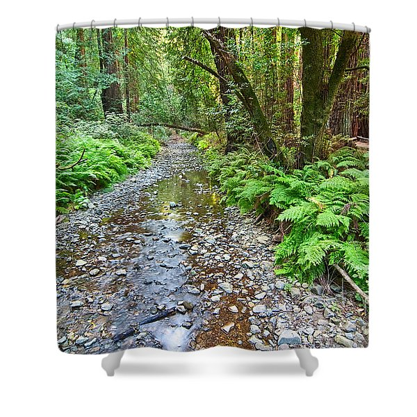 Redwood Forest Of Muir Woods National Monument. Shower Curtain