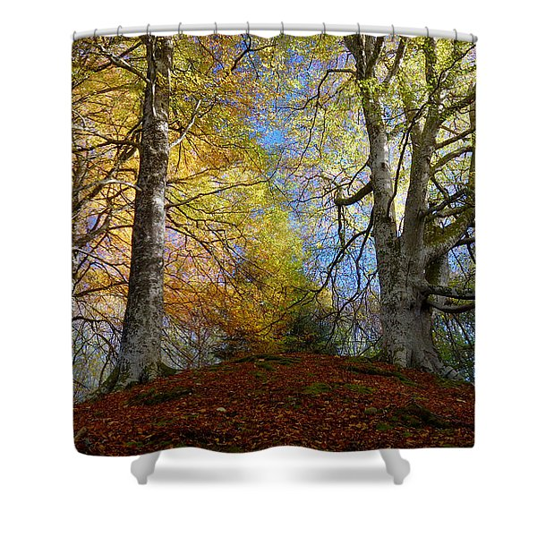 Reelig Forest  Shower Curtain