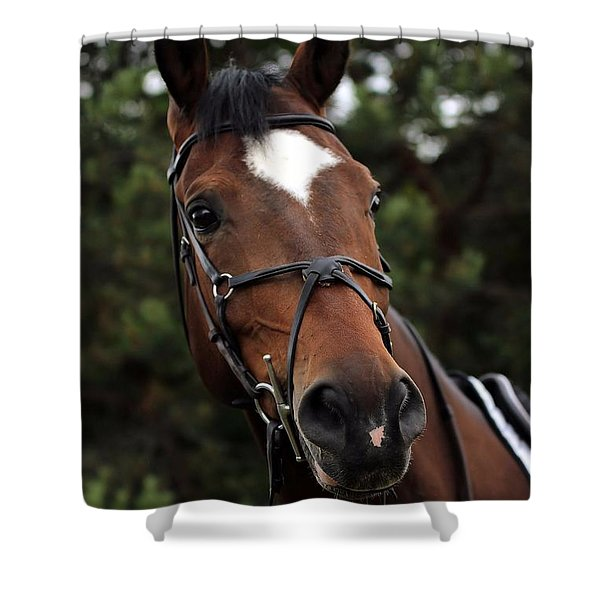 Regal Horse Shower Curtain