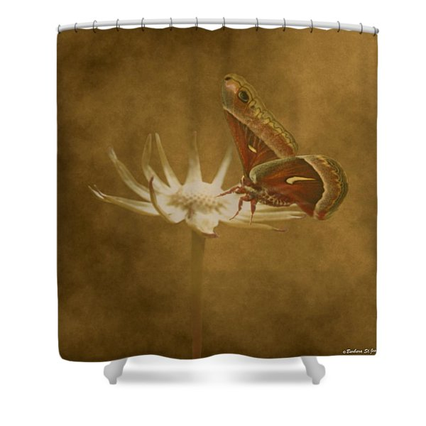 Resting Moth Shower Curtain