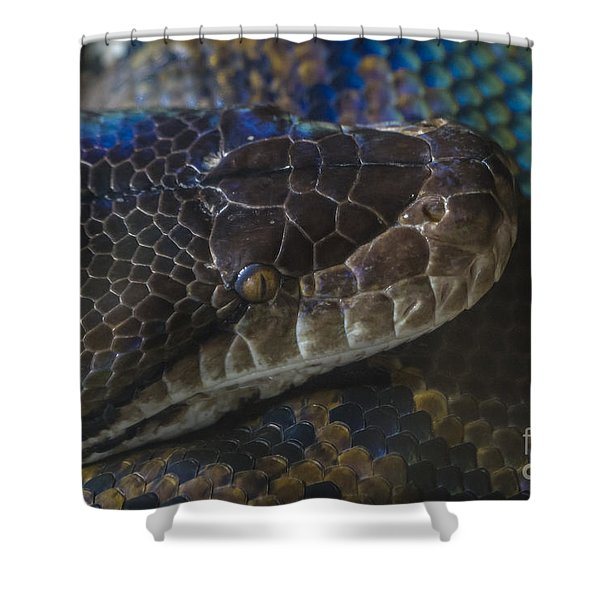 Reticulated Python With Rainbow Scales Shower Curtain