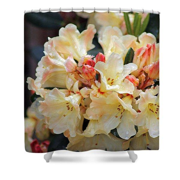 Rhododendron Nancy Evans Shower Curtain