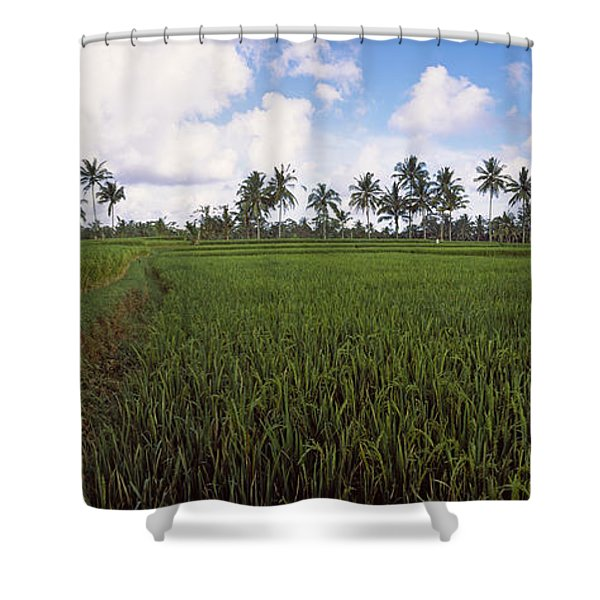 Rice Field, Bali, Indonesia Shower Curtain