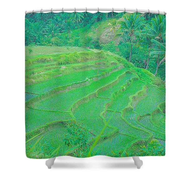 Rice Fields In Indonesia Shower Curtain