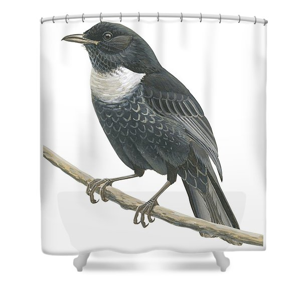 Ring Ouzel  Shower Curtain
