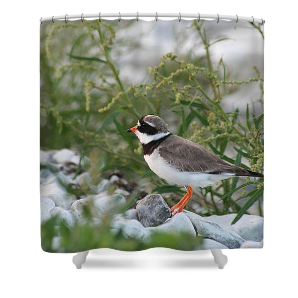 Ringed Plover On Rocky Shore Shower Curtain