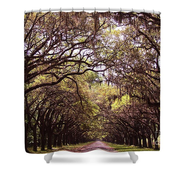 Road Of Trees Shower Curtain