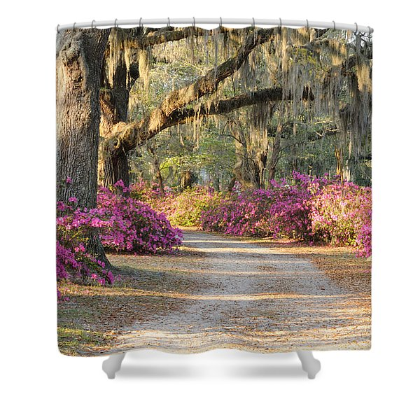Road With Live Oaks And Azaleas Shower Curtain