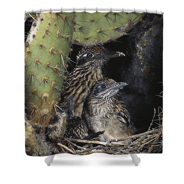 Roadrunners In Nest Shower Curtain