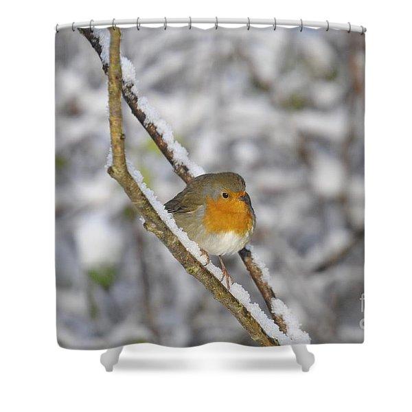 Robin At Winter Shower Curtain