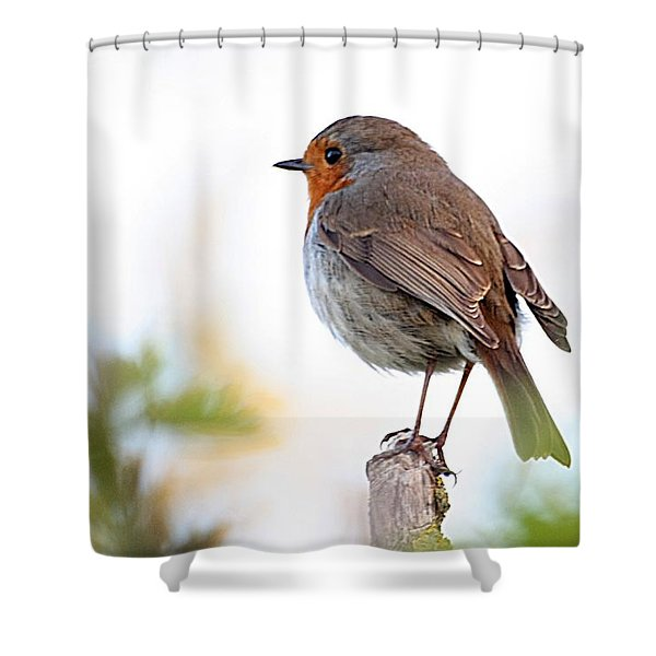 Shower Curtain featuring the photograph Robin On A Pole by Jeremy Hayden