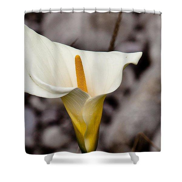 Rock Calla Lily Shower Curtain