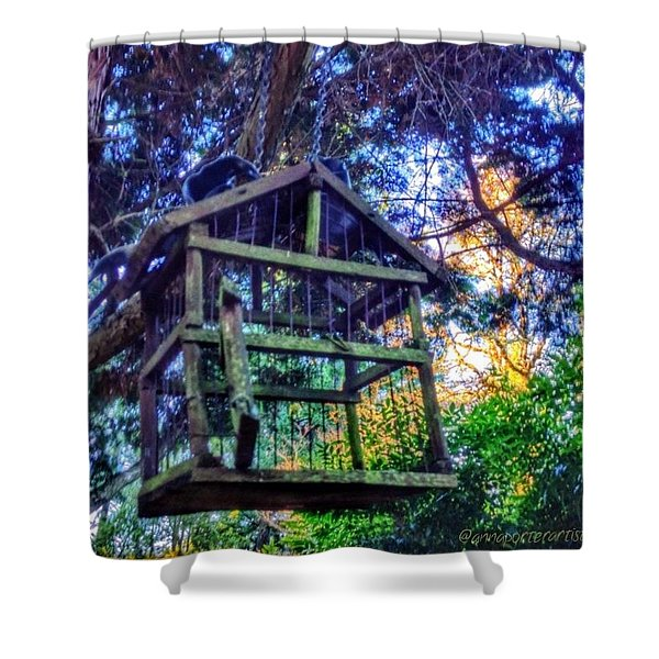 Room For Rent For A Bird Shower Curtain