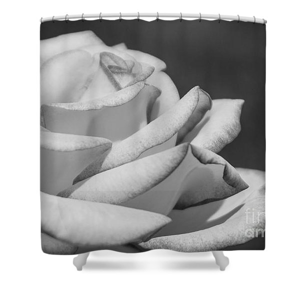Rose Black And White Shower Curtain