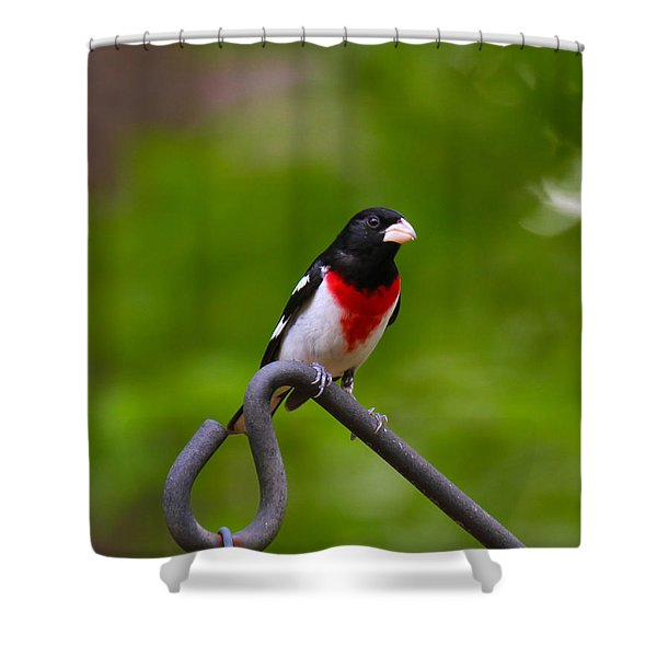 Shower Curtain featuring the photograph Rose Breasted Grosbeak by Robert L Jackson