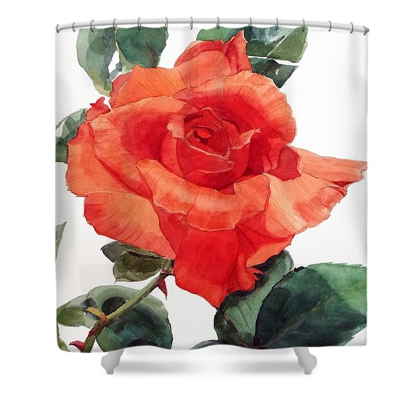 Watercolor Of A Single Red Rose I Call Red Rose Filip Shower Curtain