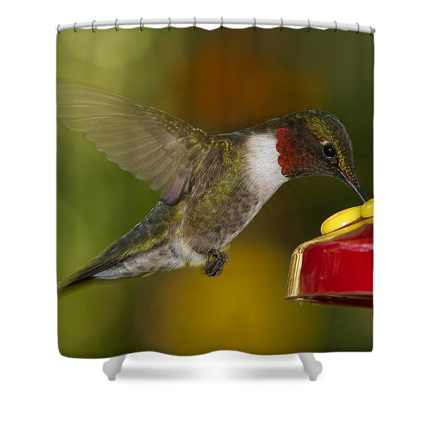 Shower Curtain featuring the photograph Ruby-throat Hummer Sipping by Robert L Jackson