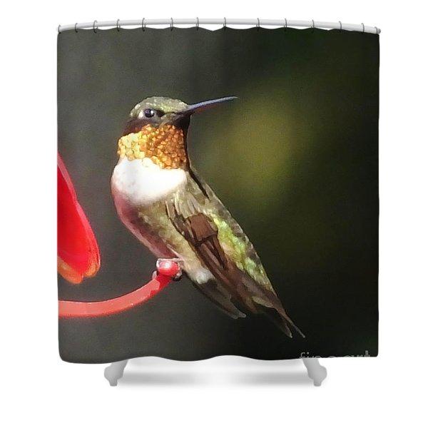 Ruby Throated Hummingbird 2 Shower Curtain