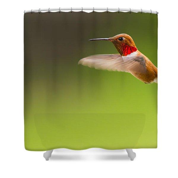 Rufous Hummingbird Male Shower Curtain
