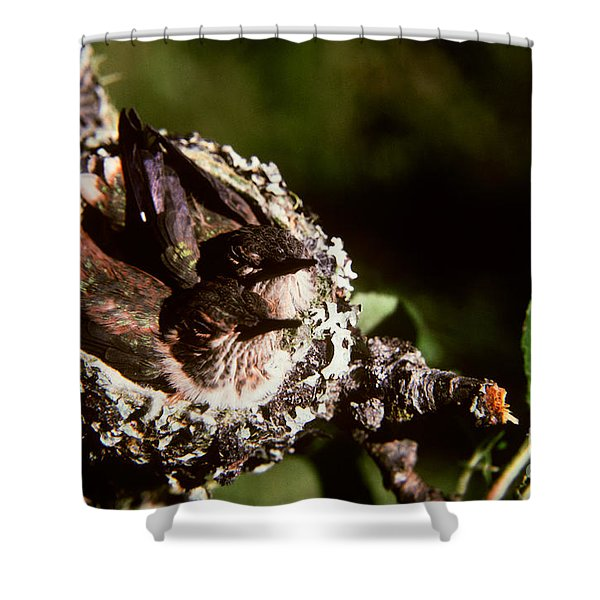 Rufous Hummingbirds In Nest Shower Curtain