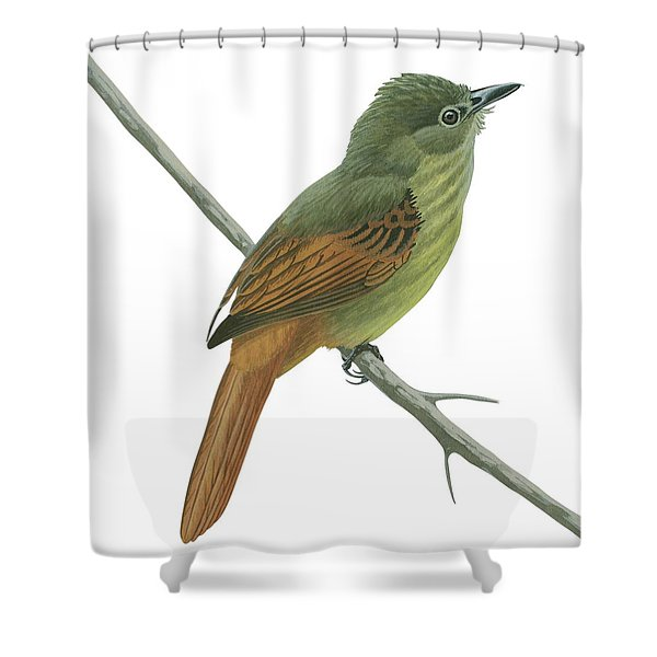 Rufous Tailed Flatbill  Shower Curtain