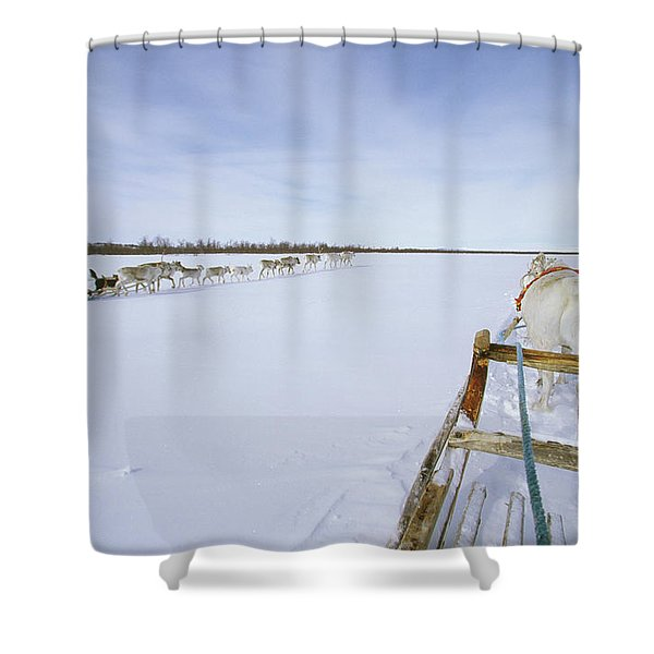 Saami Woman On Sleigh Drives Flock Shower Curtain