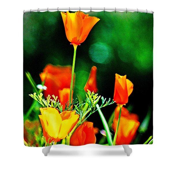 Sacramento Delta Poppies Shower Curtain