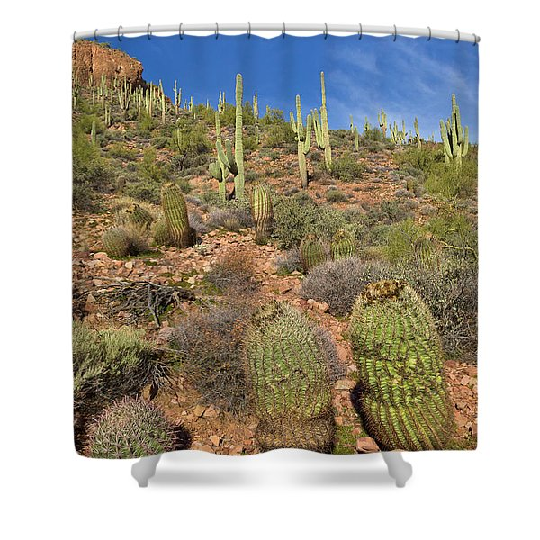 Saguaro And Barrel Cacti  Tonto N M Shower Curtain