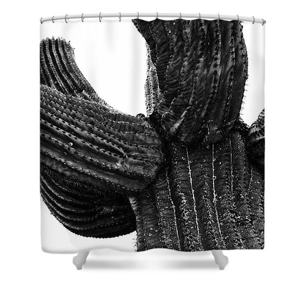 Saguaro Cactus Black And White 3 Shower Curtain