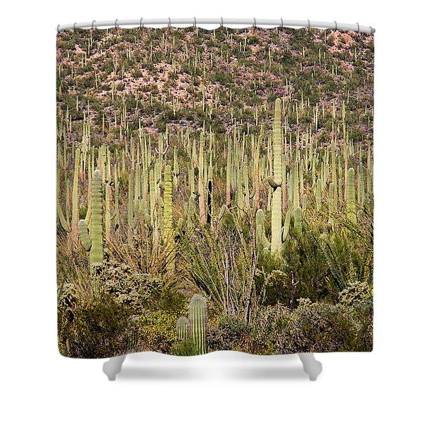 Saguaro Colony Shower Curtain