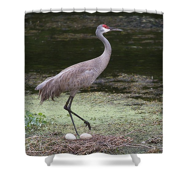 Sandhill Crane And Eggs Shower Curtain