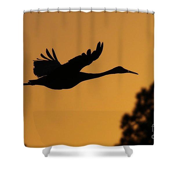 Sandhill Crane In Flight Shower Curtain