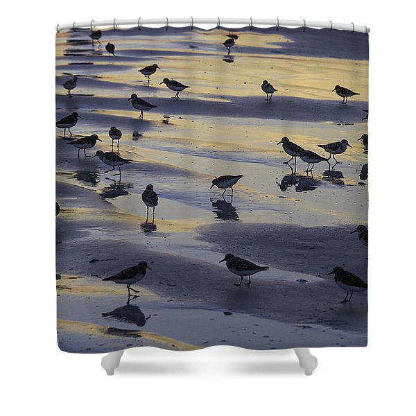 Sandpiper Sunset Convention Shower Curtain