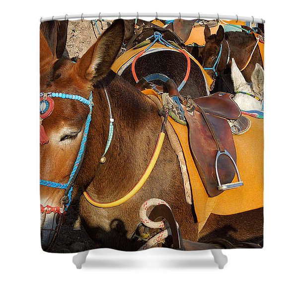 Santorini Donkeys Ready For Work Shower Curtain