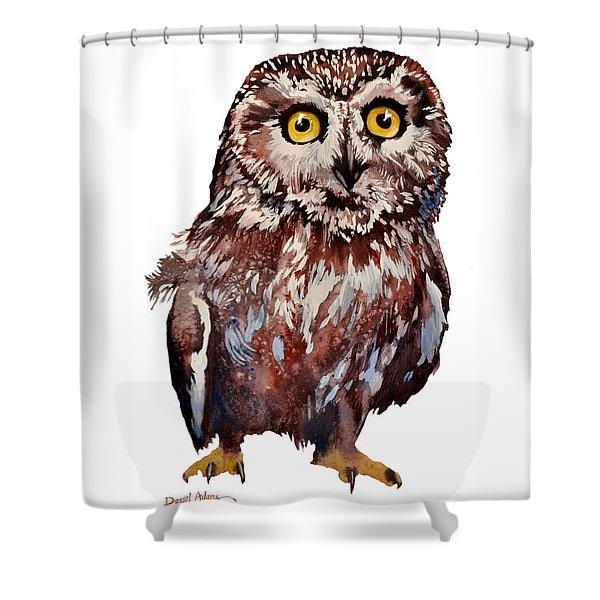 Da148 Saw Whet Owl Daniel Adams Shower Curtain