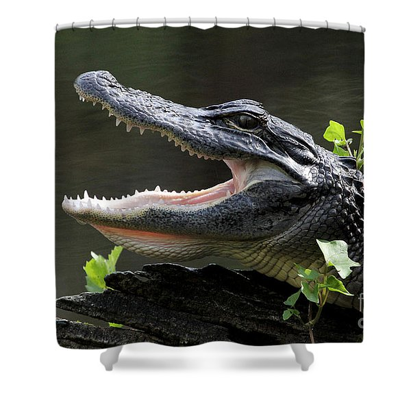 Say Aah - American Alligator Shower Curtain