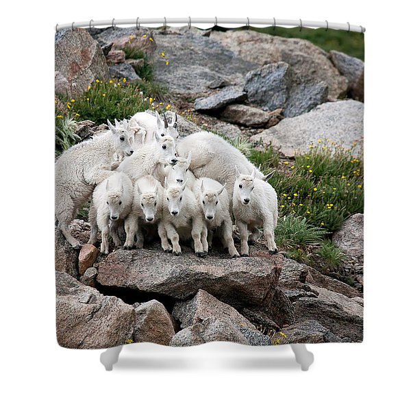 Say Cheese Shower Curtain