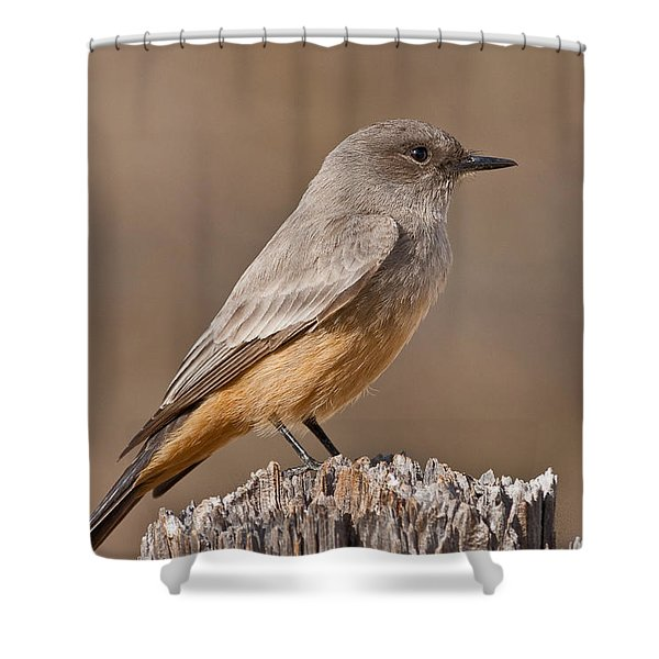 Say's Phoebe On A Fence Post Shower Curtain