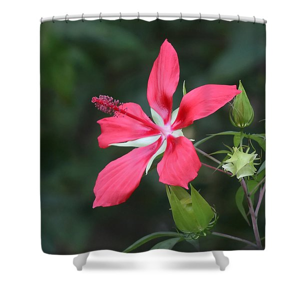 Scarlet Hibiscus #3 Shower Curtain