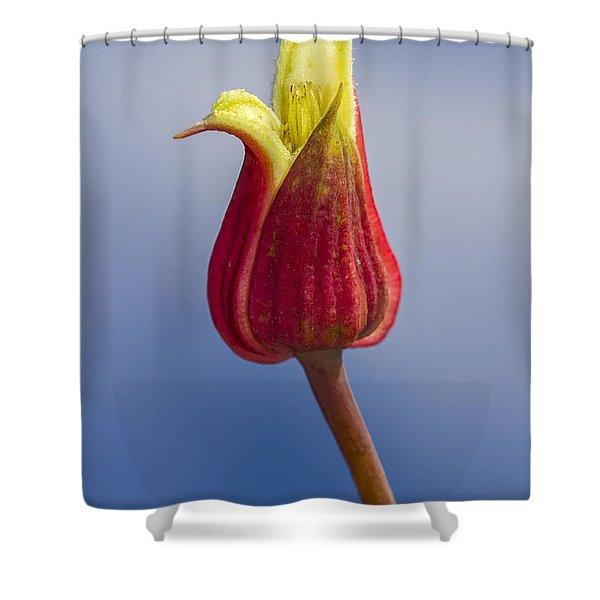 Scarlet Leatherflower Shower Curtain