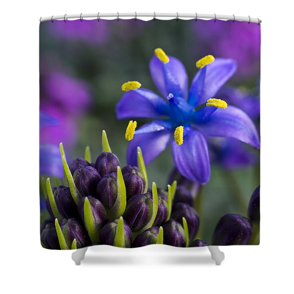 Scilla Peruviana Shower Curtain
