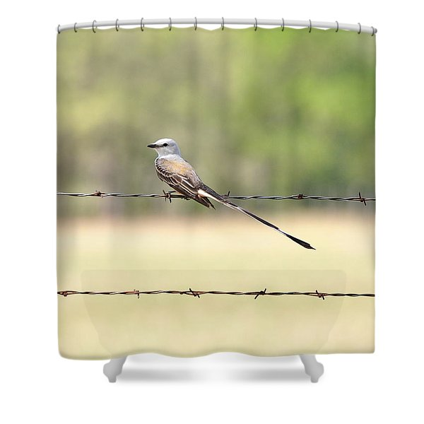 Scissor-tailed Flycatcher Shower Curtain