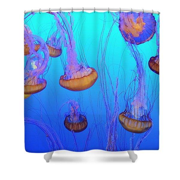 Sea-nettle Jelly Fish  Shower Curtain