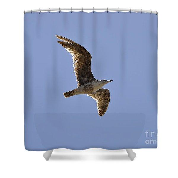 Seagull N Light  Shower Curtain