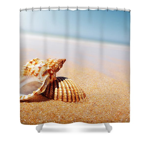 Seashell And Conch Shower Curtain
