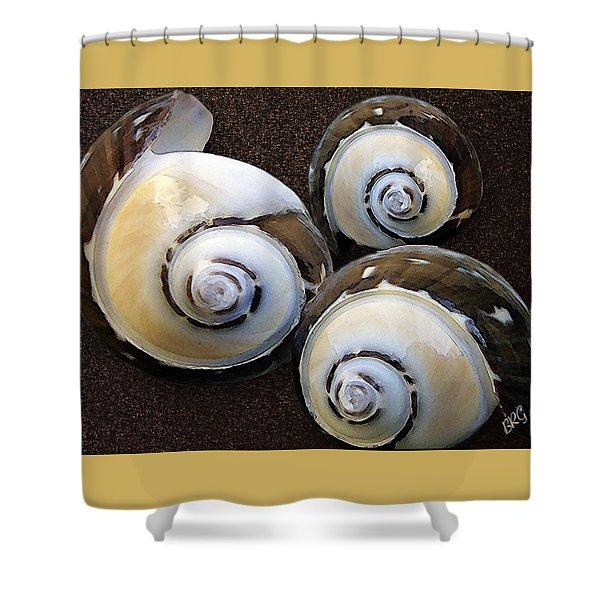 Seashells Spectacular No 23 Shower Curtain