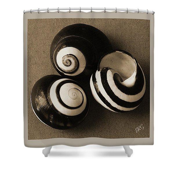Seashells Spectacular No 27 Shower Curtain