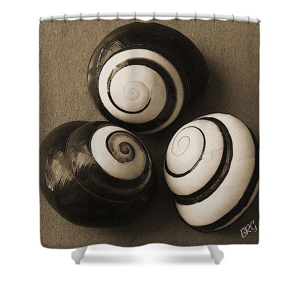 Seashells Spectacular No 28 Shower Curtain